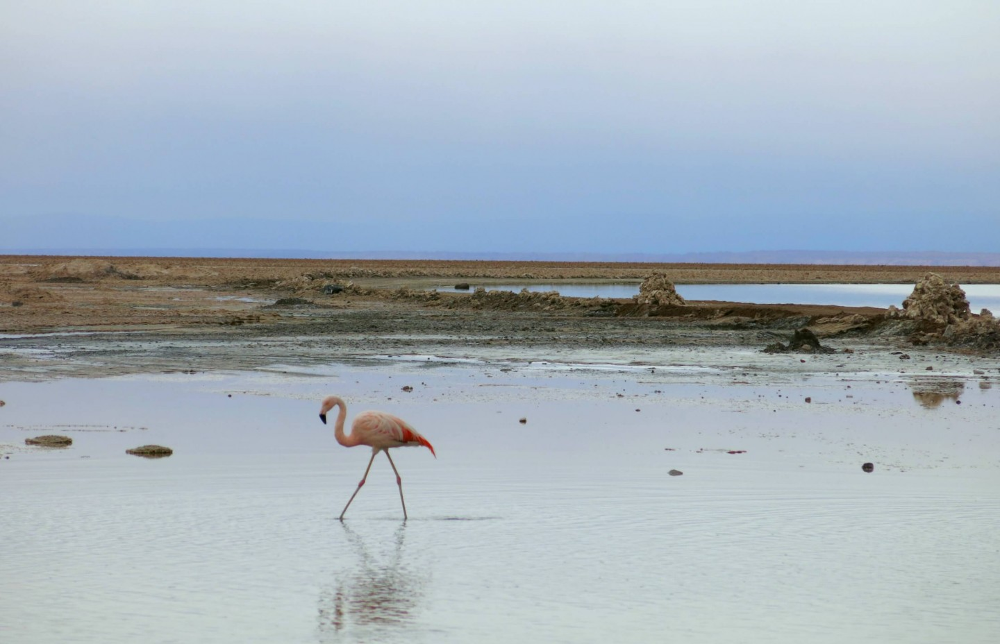 The lagoons in The Atacama Desert is one of the few places in the world you can see flamingos in their natural habitat.
