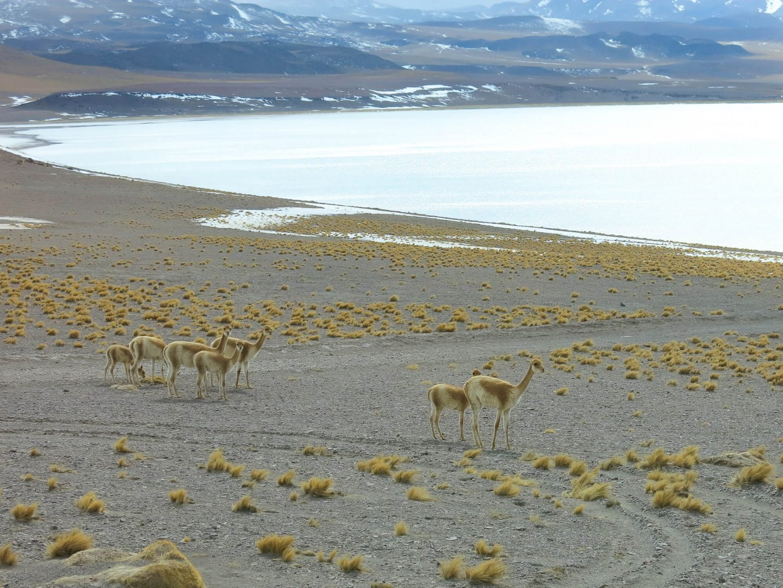 Atacama desert tours, Chile. A round up of the different tours you can take when you visit San Pedro de Atacama.   Dalton-Banks