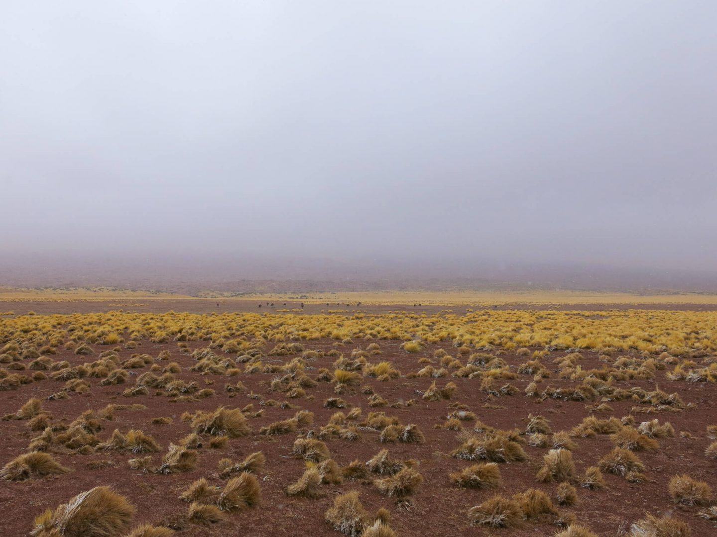 It can get cold in the Atacama Desert, make sure to bring lots of layers. We were caught out by the winter weather. Find other tips for booking tours in the Atacama Desert.   Dalton-Banks