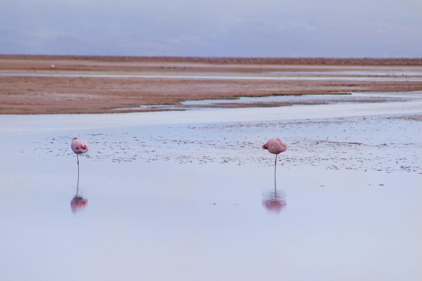 The flamingos on the Atacama Salt Flats. A guide to the different tours you can book when visiting the Atacama Desert. | Dalton-Banks